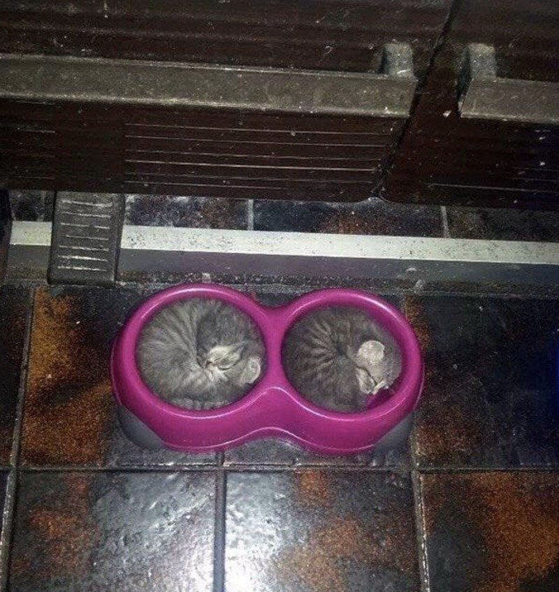 Кішки - це рідини, і цьому є докази - фото 9