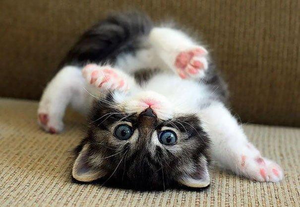 Для підняття настрою в локдаунний вікенд: 17 фото кошенят, мімімішність яких зашкалює - фото 18