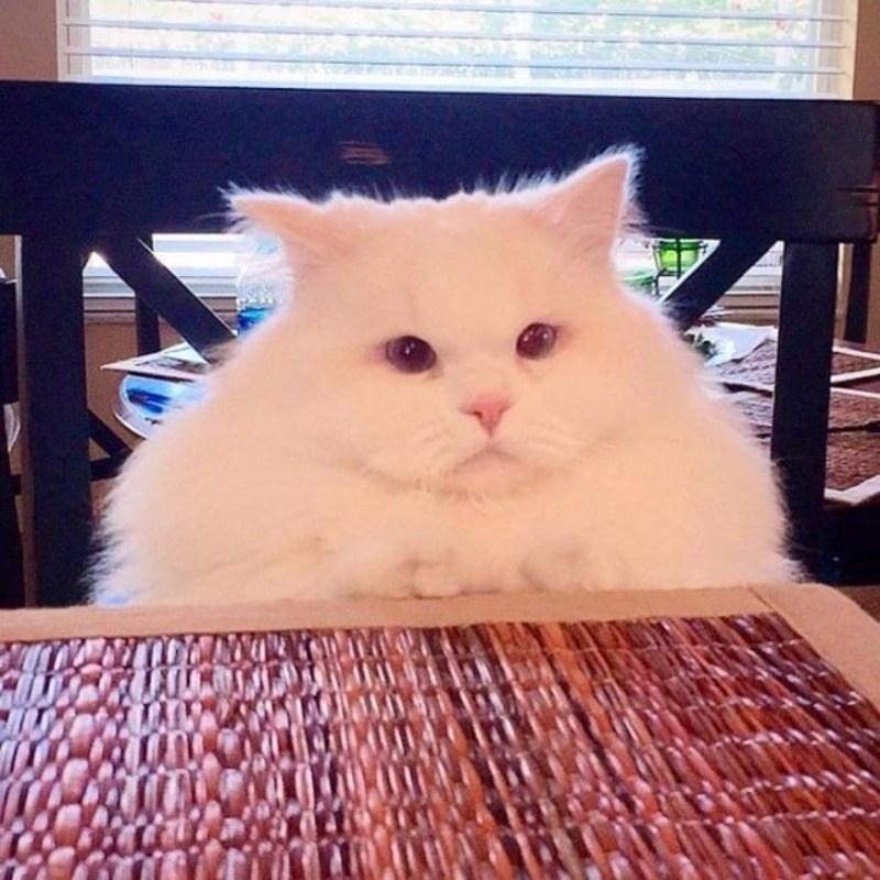 Кошки - правдивые фото, в которых отражена вся суть их натуры  - фото 10