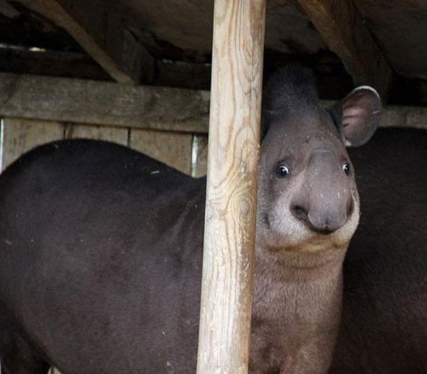 Порция позитива: фото самых нефотогеничных животных  - фото 8