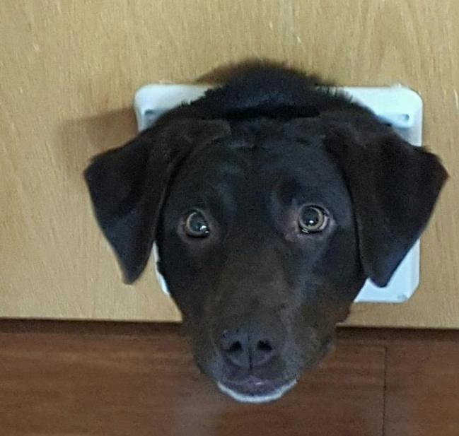Смішні витівки собак, які змусять вас посміхнутися (Фото) - фото 5