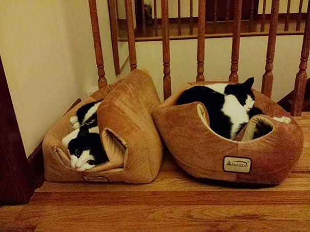 15 фото кошек, которые не оценили подарков от хозяев - фото 14