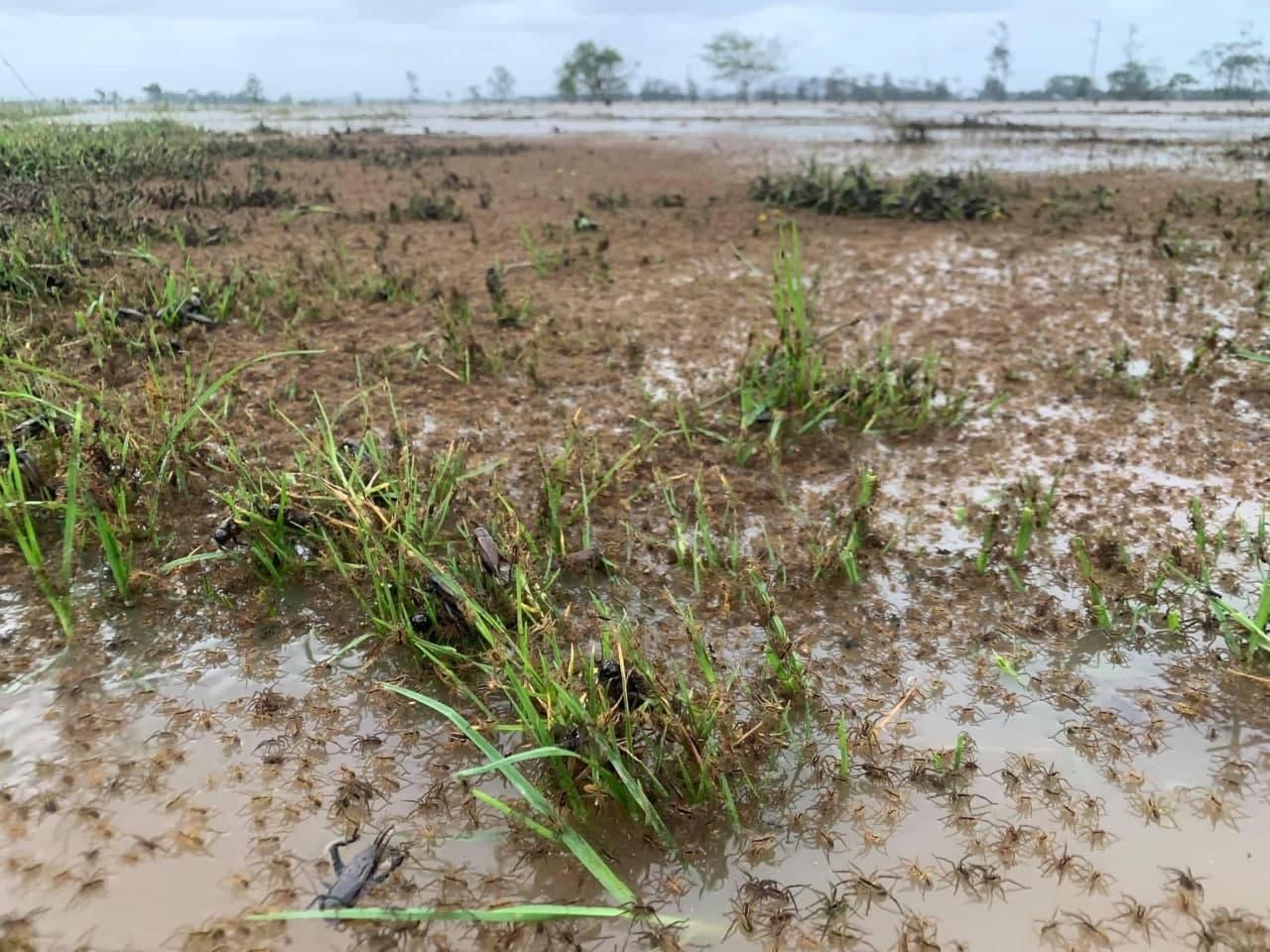 Австралия страдает от страшного наводнения: подробности (ФОТО, ВИДЕО) - фото 4