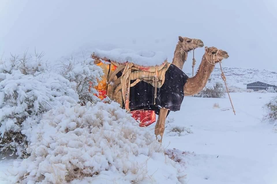 В Сахаре выпал снег — удивительные фото морозной пустыни - фото 3