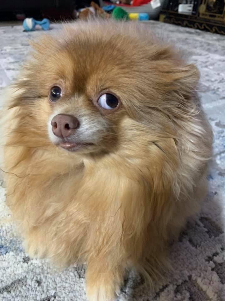 Порция позитива: люди поделились самыми нелепыми фото своих собак - фото 6
