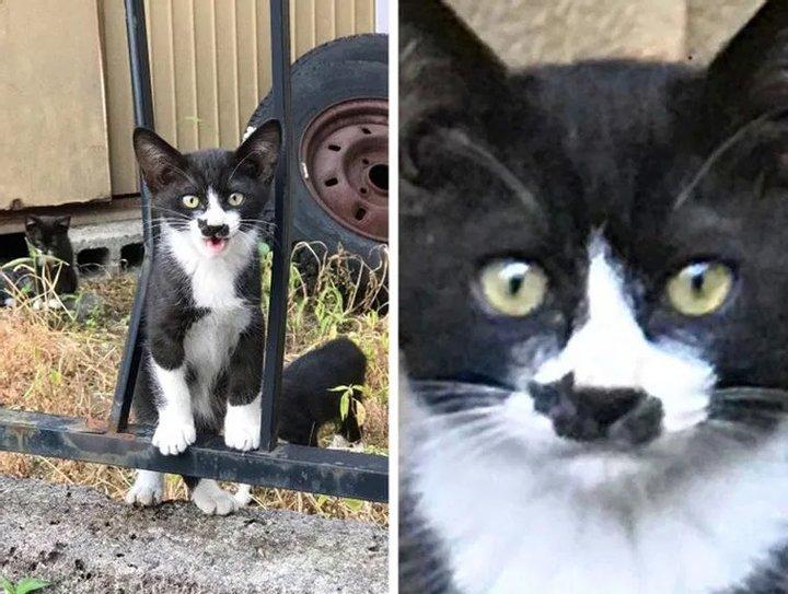 Природа явно прибегла к фотошопу: самые необычные кошки в мире (ФОТО)  - фото 7
