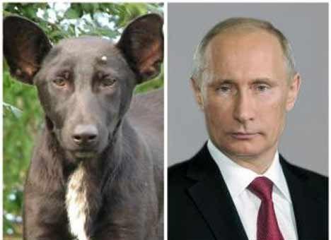 Из российского плена вернули собаку моряков - Цензор.НЕТ 2196