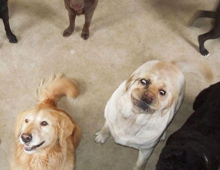 Порция позитива: фото самых нефотогеничных животных  - фото 2