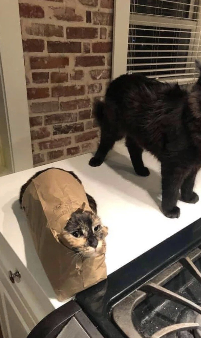 Кішки - це рідини, і цьому є докази - фото 7