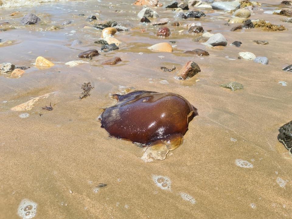 На побережье австралийского курортного города из океана вынесло загадочное существо: как оно выглядит (ФОТО) - фото 2