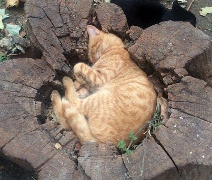 Спят усталые зверушки - фотографии животных, которые заснули в случайных местах  - фото 4