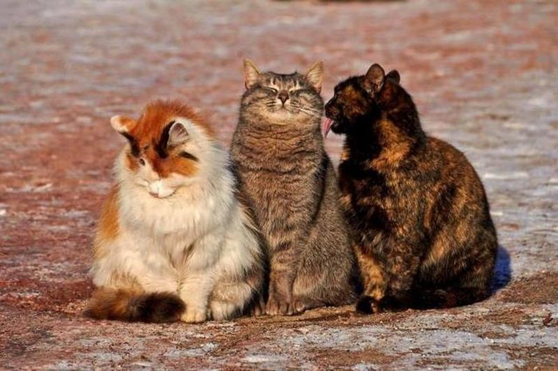 Для хорошего настроения: подборка фото забавных зверюшек со всего мира - фото 22