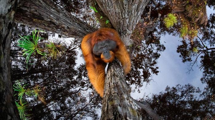 Фотографии дикой природы 2021: кто стал победителем (ФОТО) - фото 2