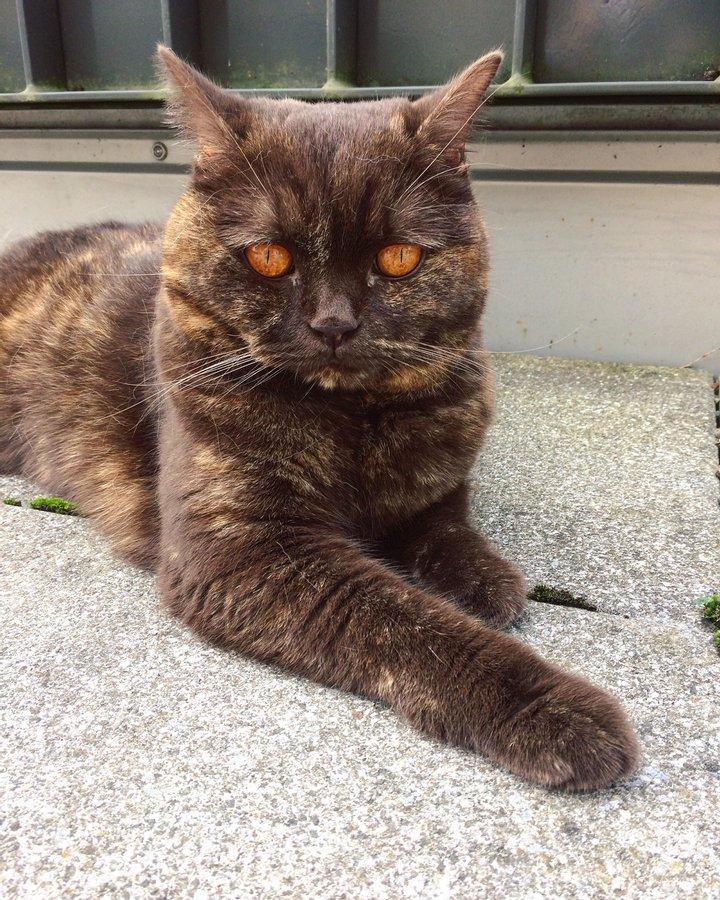 Природа явно прибегла к фотошопу: самые необычные кошки в мире (ФОТО)  - фото 2
