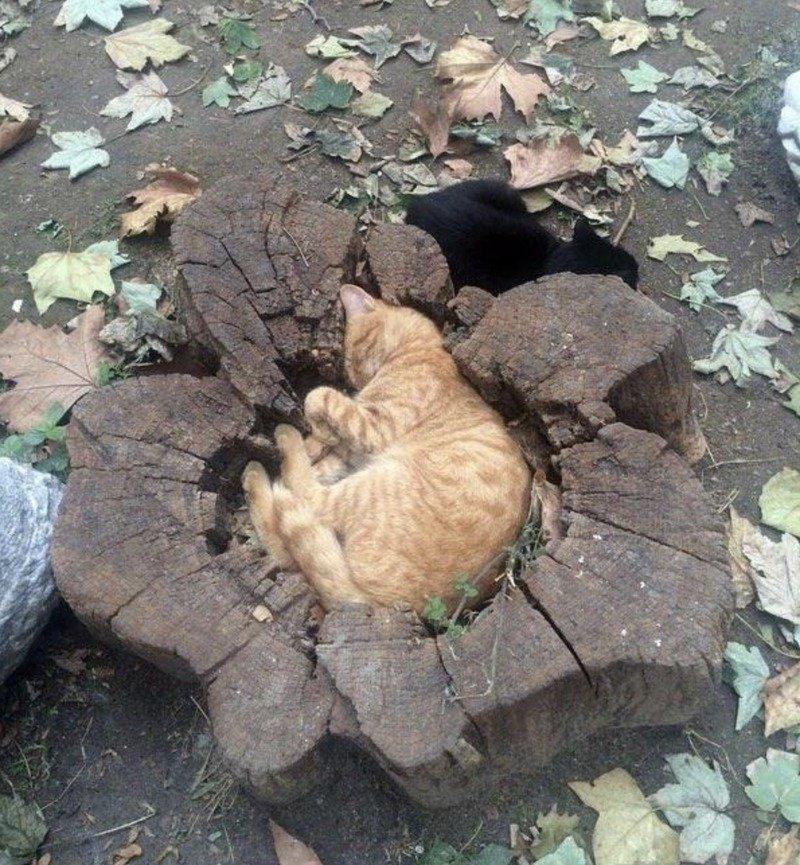Кішки - це рідини, і цьому є докази - фото 8