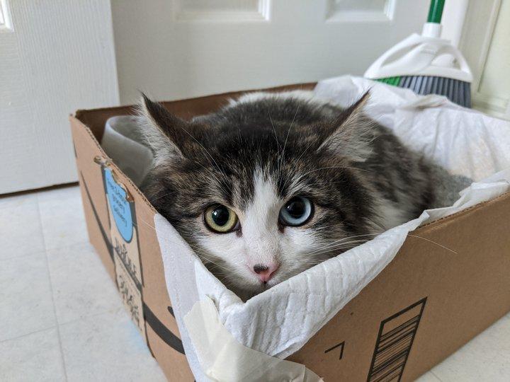 Природа явно прибегла к фотошопу: самые необычные кошки в мире (ФОТО)  - фото 4