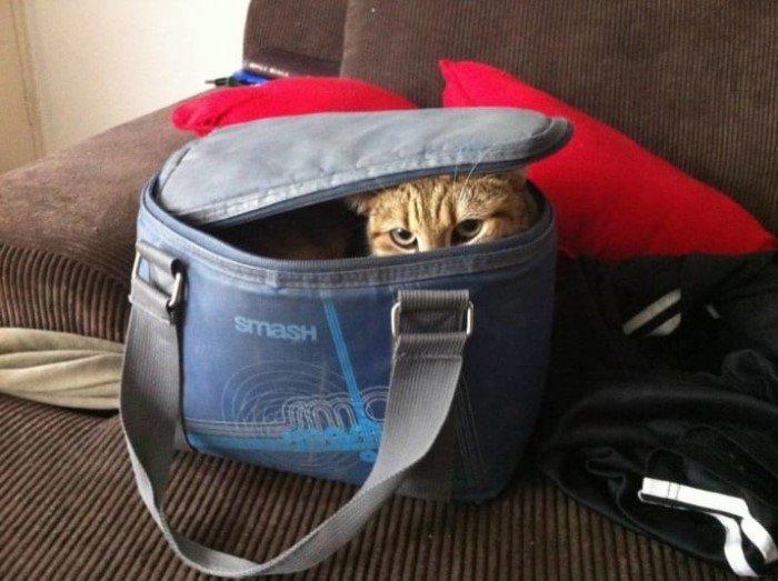 Когда кошки - главные в доме (Позитивные фото) - фото 6