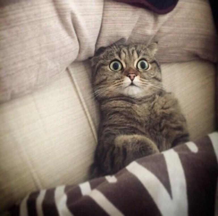 Кошки - правдивые фото, в которых отражена вся суть их натуры  - фото 16