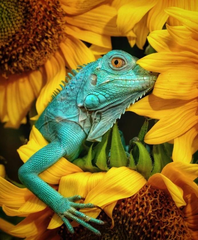 Лучшие снимки дикой природы от социальной сети Agora - фото 2