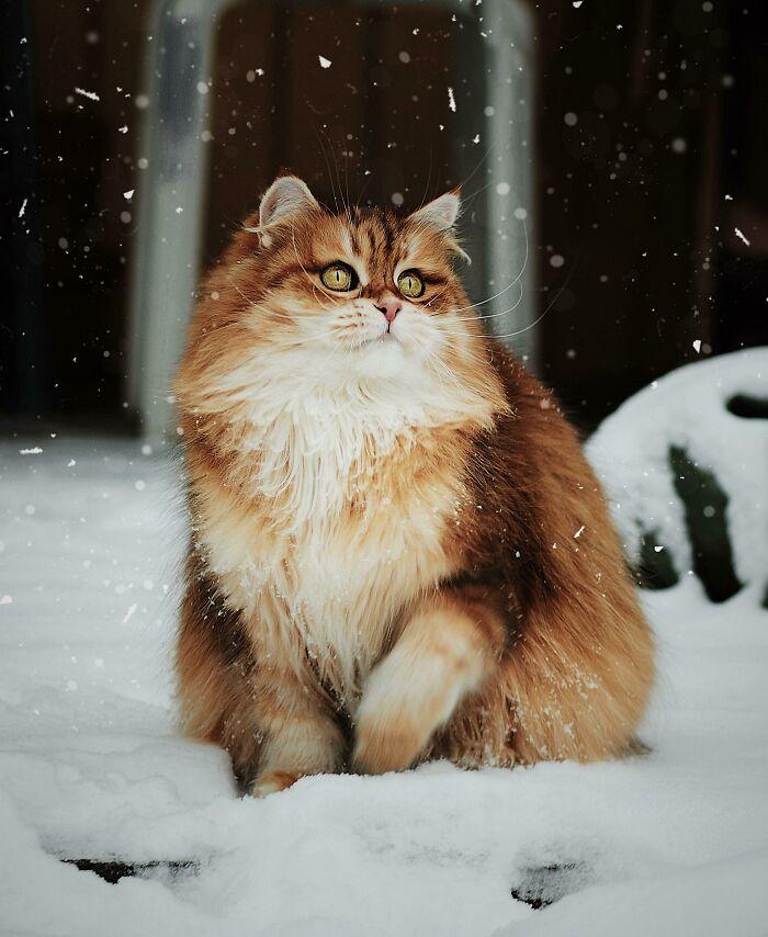 Семнадцать фото кошек, которым впору работать в модельном бизнесе  - фото 5