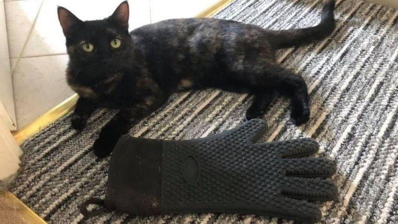 В Англии кот-клептоман год воровал вещи: хозяйка разыскивает «жертв» - фото 3