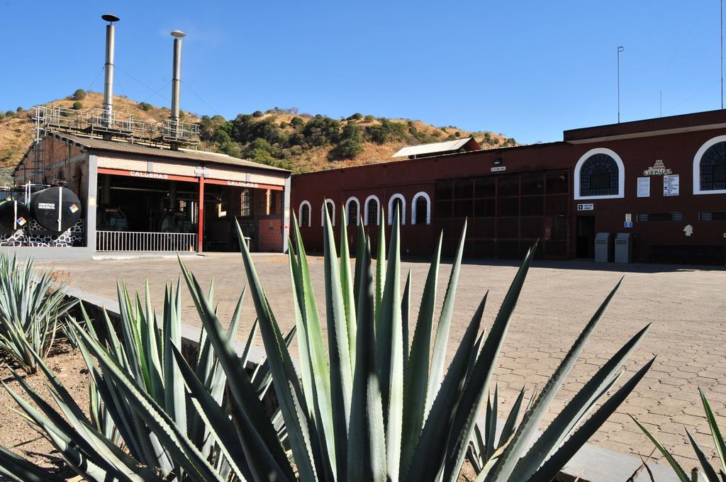 Провести ночь в бочке из-под текилы: в Мексике открыли отель на территории завода по производству напитка - фото 16