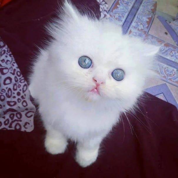 Для підняття настрою в локдаунний вікенд: 17 фото кошенят, мімімішність яких зашкалює - фото 4