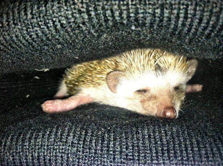 Спят усталые зверушки - фотографии животных, которые заснули в случайных местах  - фото 5