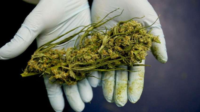 Можно ли курить марихуану при раке продажу семян конопли запретили
