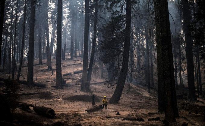 У США вирує лісова пожежа: горять гігантські секвої (ФОТО) - фото 2
