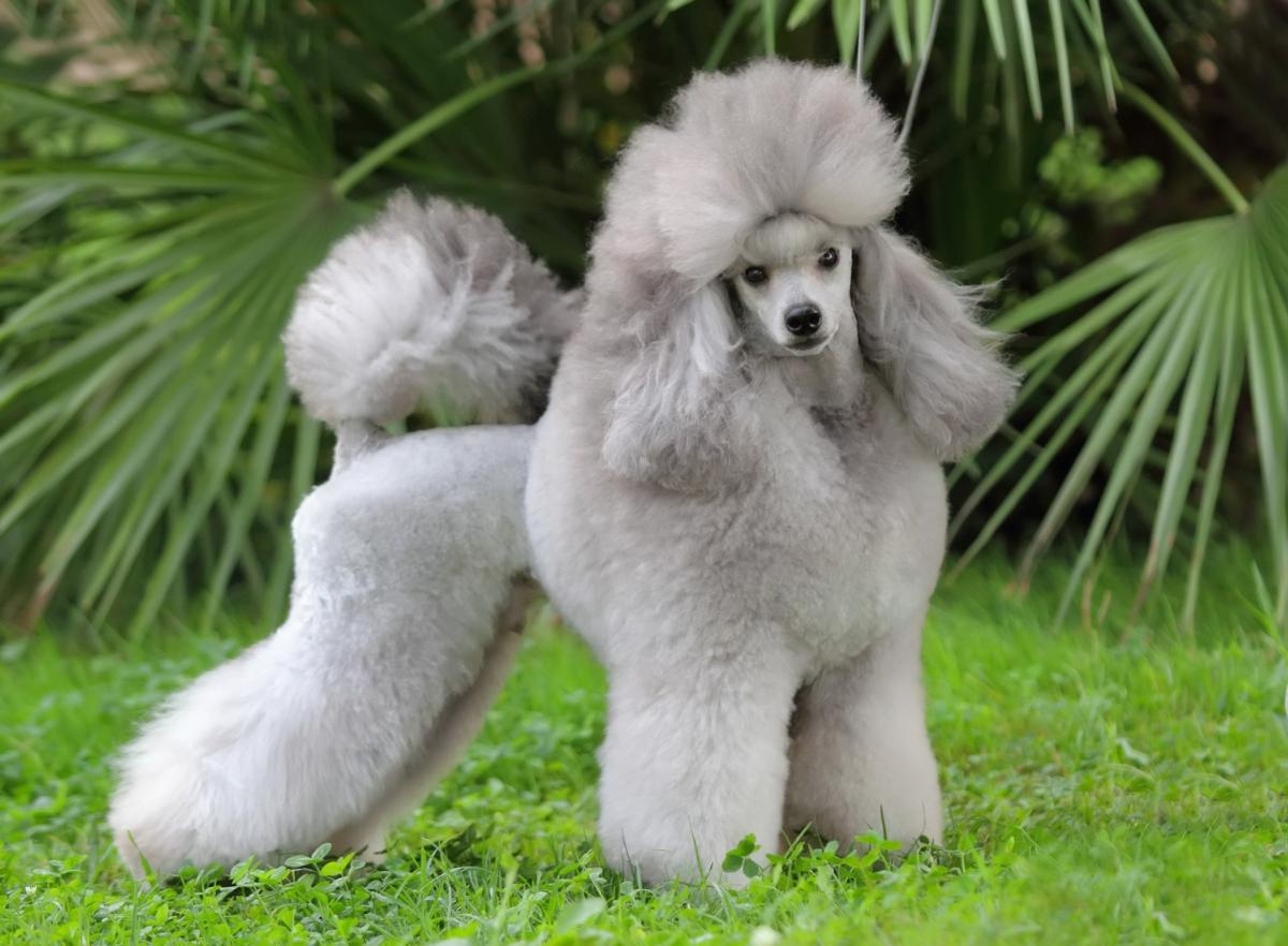 Какие породы собак имеют крепкое здоровье (Фото) - фото 6