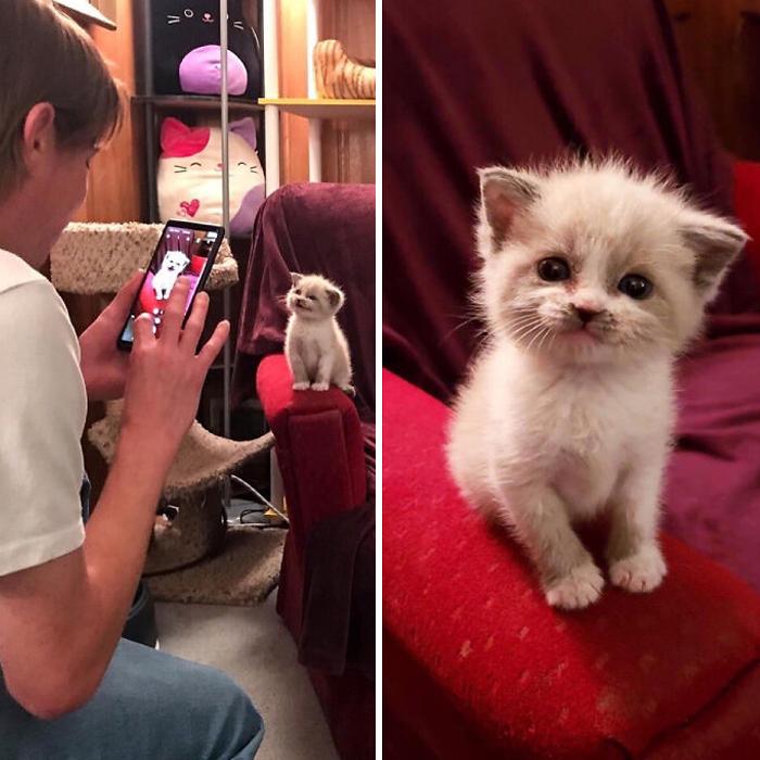 Семнадцать фото кошек, которым впору работать в модельном бизнесе  - фото 9