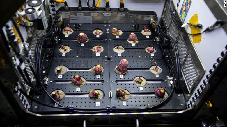 Фотофакт: астронавты собрали урожай редиса на МКС - фото 3