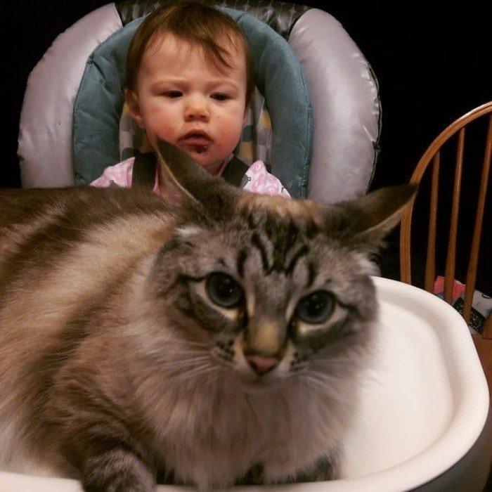 Когда кошки - главные в доме (Позитивные фото) - фото 7