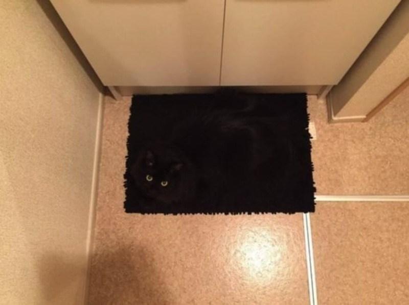 Кошки - правдивые фото, в которых отражена вся суть их натуры  - фото 24