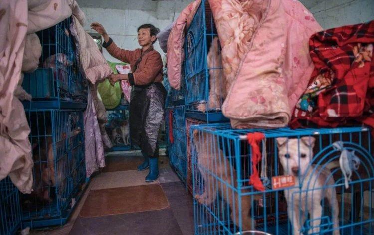 Жінка з Китаю поселила у своєму будинку майже 1500 різних тварин (ФОТО, ВІДЕО) - фото 2