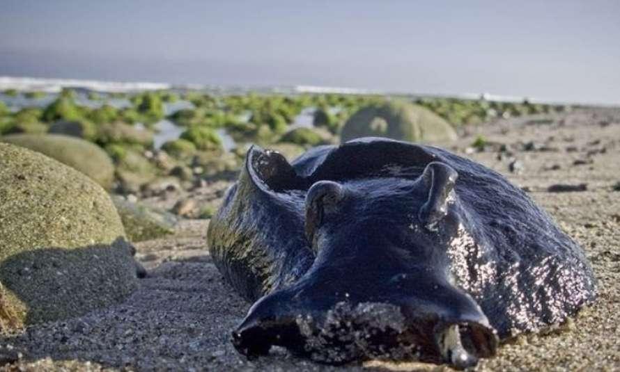 В Тихом океане обнаружили гигантских слизней (ФОТО) - фото 2