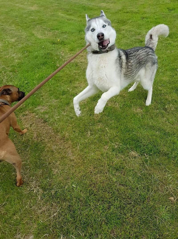 Порция позитива: люди поделились самыми нелепыми фото своих собак - фото 9