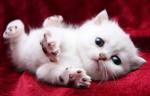 Для підняття настрою в локдаунний вікенд: 17 фото кошенят, мімімішність яких зашкалює - фото 11
