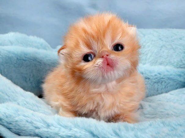 Для підняття настрою в локдаунний вікенд: 17 фото кошенят, мімімішність яких зашкалює - фото 6