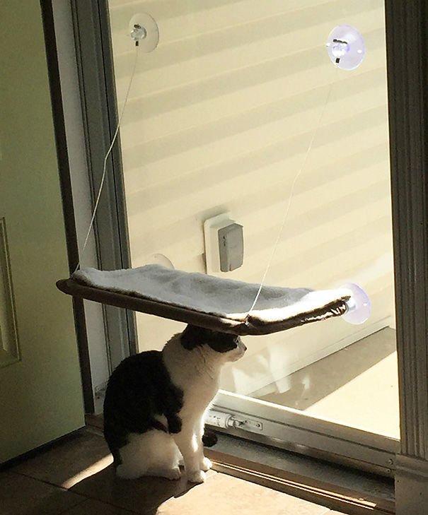 15 фото кошек, которые не оценили подарков от хозяев - фото 12