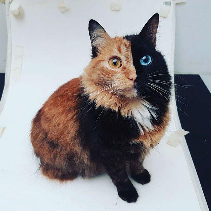 Природа явно прибегла к фотошопу: самые необычные кошки в мире (ФОТО)  - фото 8