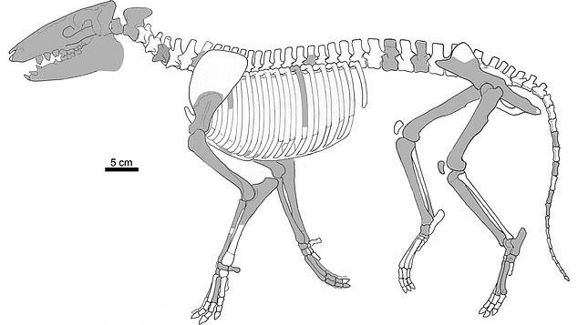 Археологи показали як виглядала доісторична тварина (фото) - фото 2