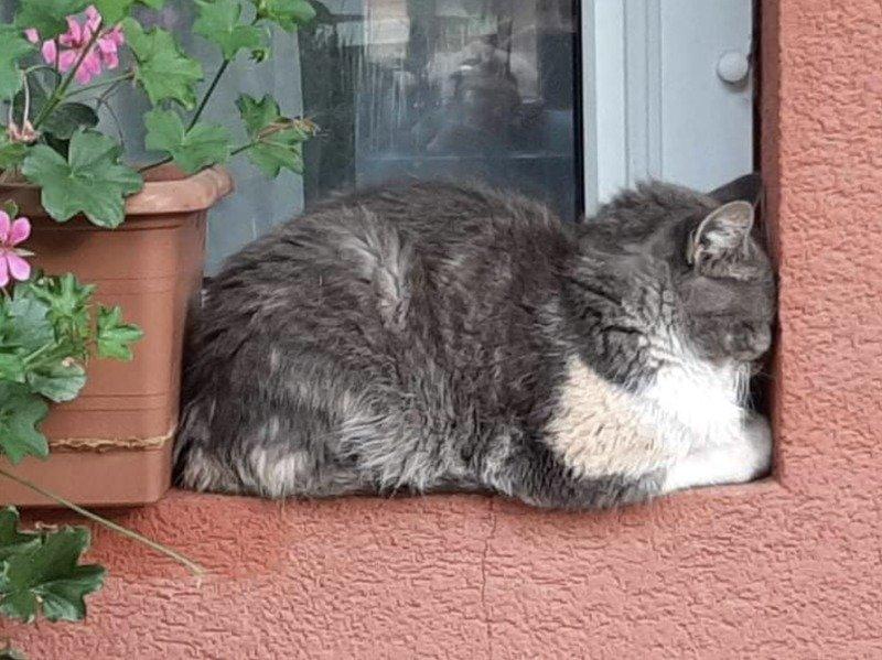 Кішки - це рідини, і цьому є докази - фото 10