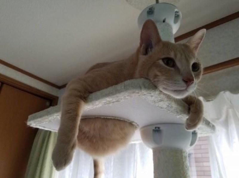 Кошки - правдивые фото, в которых отражена вся суть их натуры  - фото 20