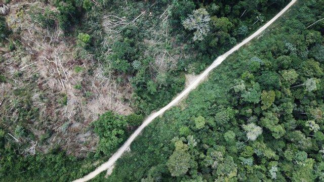 Леса Амазонии начали выделять углекислый газ: причина - фото 2