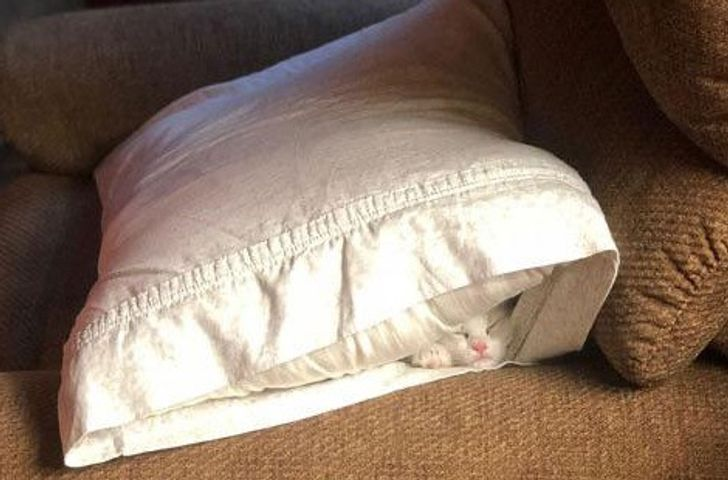 Спят усталые зверушки - фотографии животных, которые заснули в случайных местах  - фото 16
