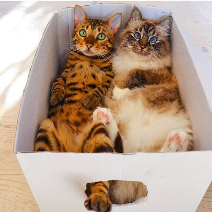 Семнадцать фото кошек, которым впору работать в модельном бизнесе  - фото 17