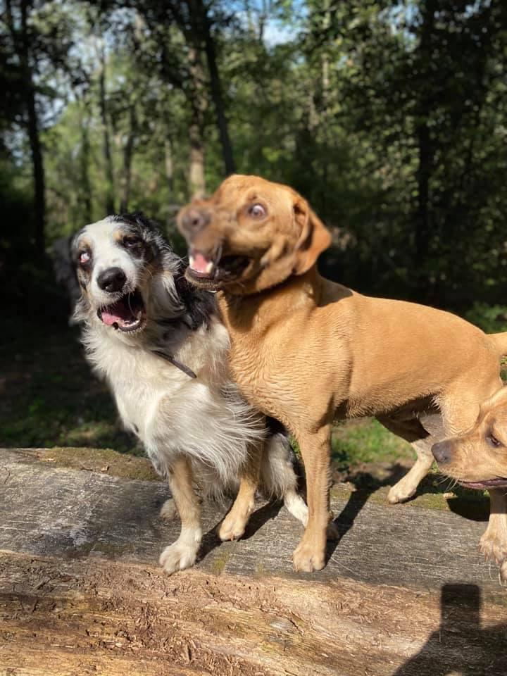 Порция позитива: люди поделились самыми нелепыми фото своих собак - фото 7