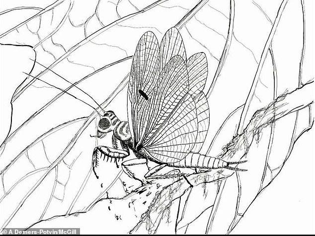 Найдены останки насекомого, обитавшего на Земле 100 млн лет назад: ФОТО уникальной находки - фото 4